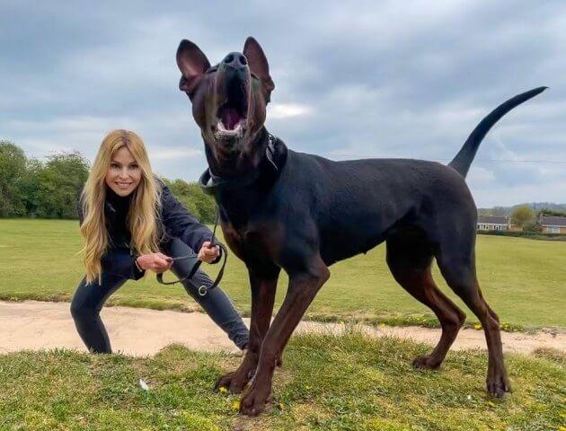 China Red Dog
