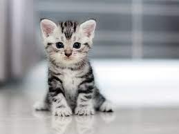 Cute Cat Breed 3
