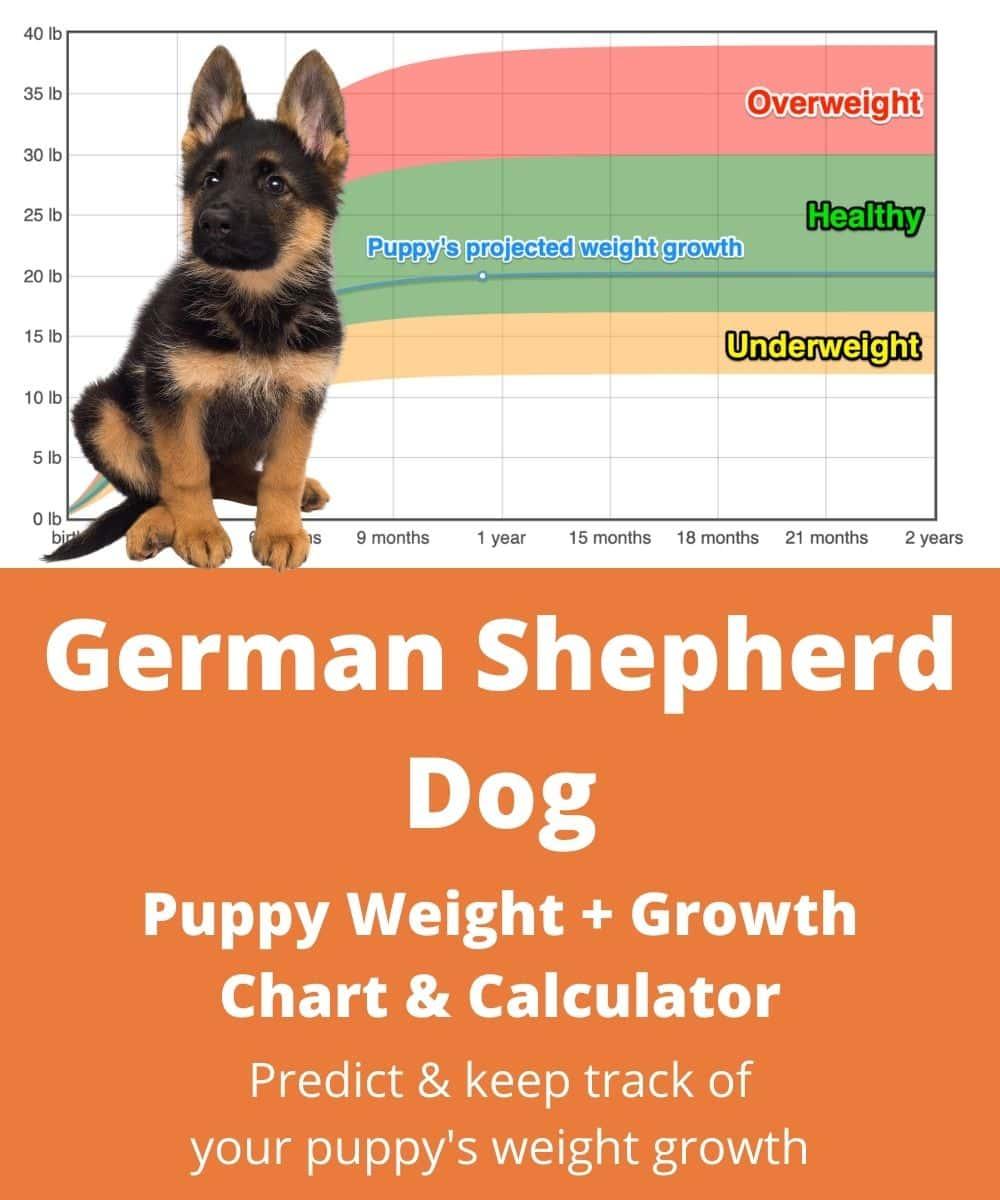 German Shepherd Growth Chart 1