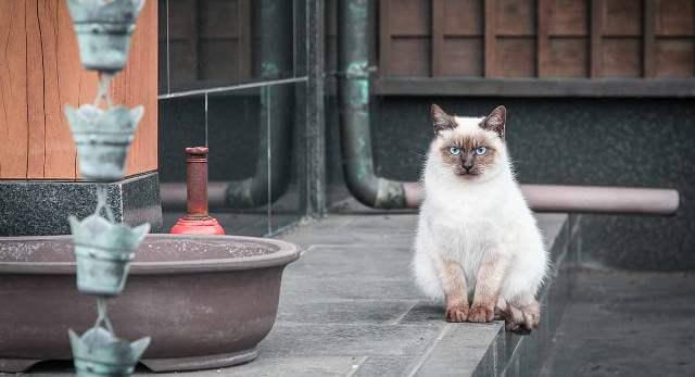 Japanese Cat Names 3