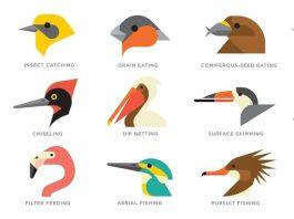 Long Beak Birds