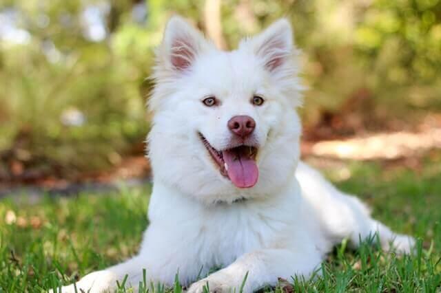Names of White Dog 10