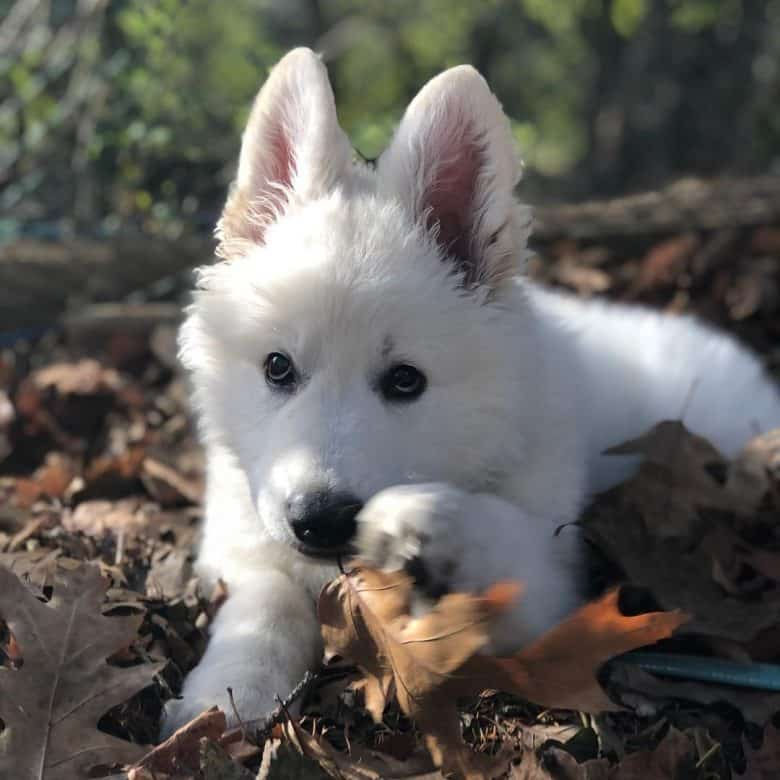 Names of White Dog 12