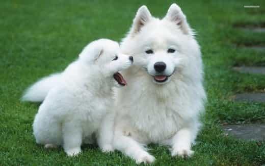 White Dog Names 1