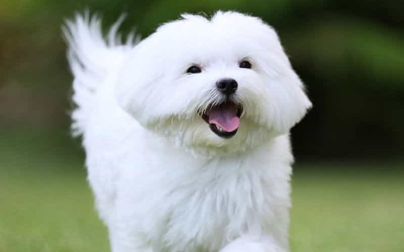 White Dog Names 5