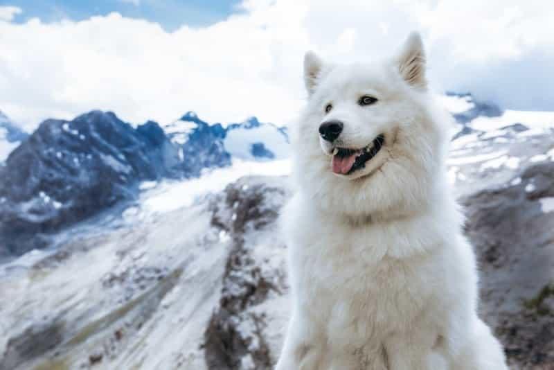 White Dog Names 6
