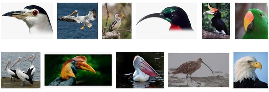 long beak birds 2