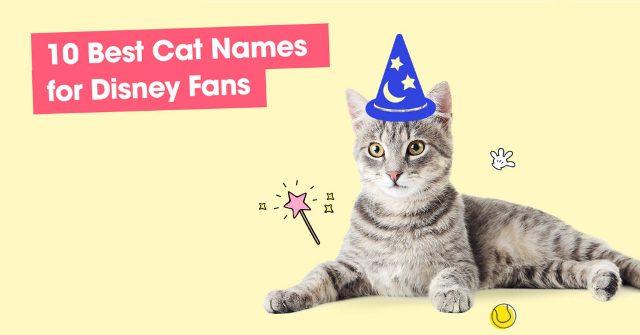 Best Cat Names for Disney Fans