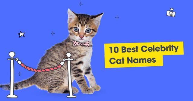 Best Celebrity Cat Names