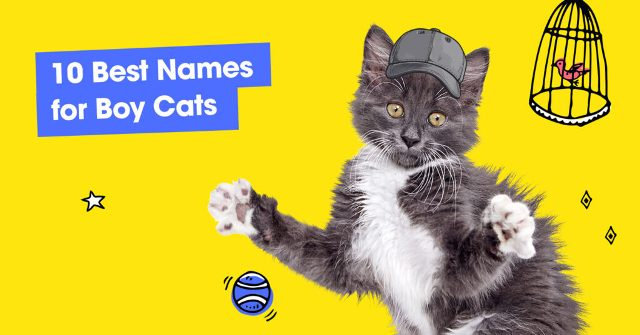 Best Names for Boy Cats