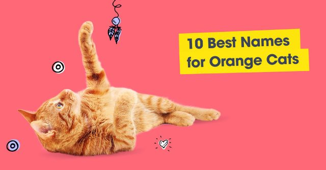 Best Names for Orange Cats
