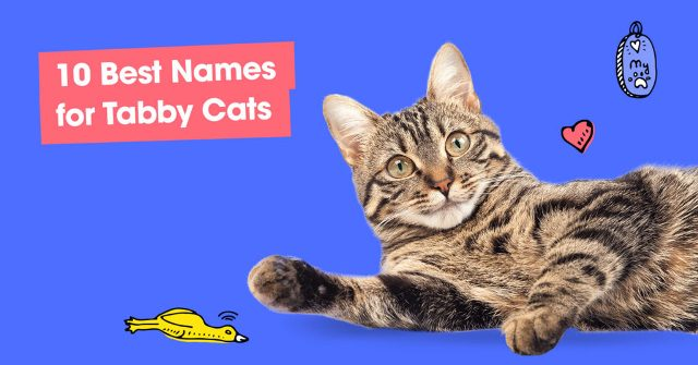 Best Names for Tabby Cats