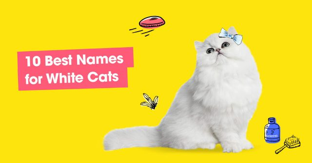 Best Names for White Cats