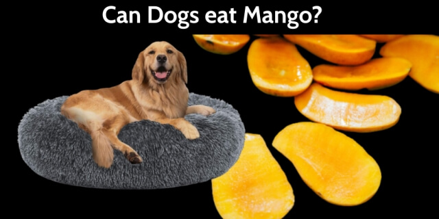 Can Dogs Eat Mango 2