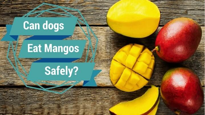 Can Dogs Eat Mangoes 6