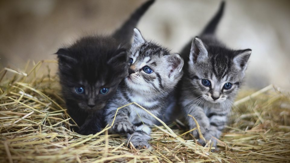 Cat Blog Names 1
