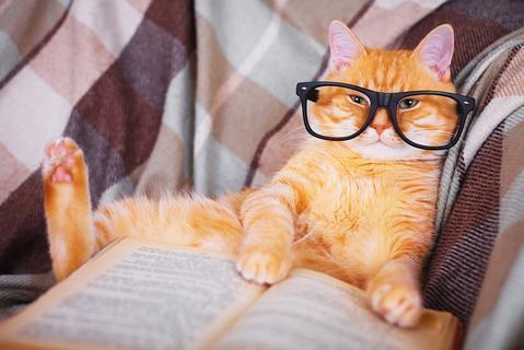 Cat Blog Names 2