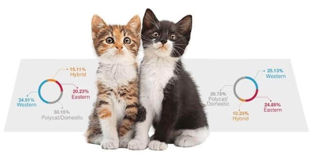 Cat DNA Tests 1