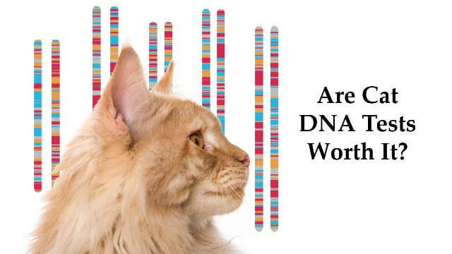 Cat DNA Tests 2