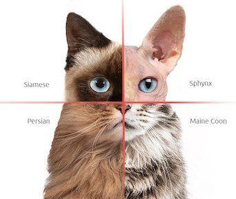 Cat DNA Tests 7