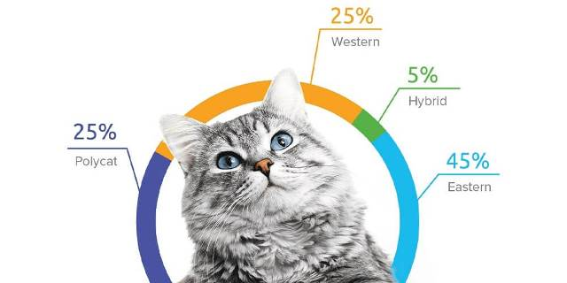 Cat DNA Tests 8