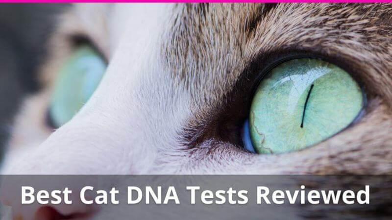 Cat DNA Tests 9