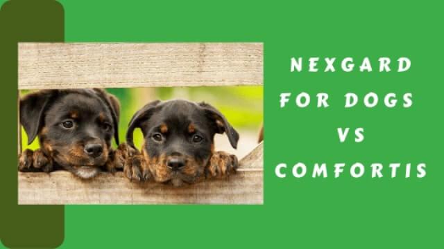 NexGard for Dogs VS Comfortis