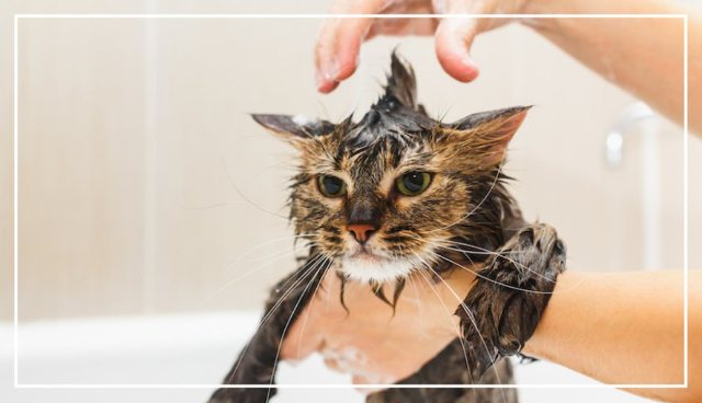 Things Cats Hate 6