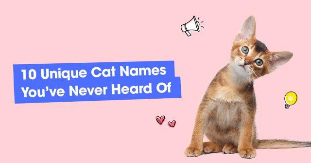Unique Cat Name