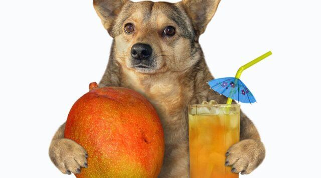 can dogs eat mango 1