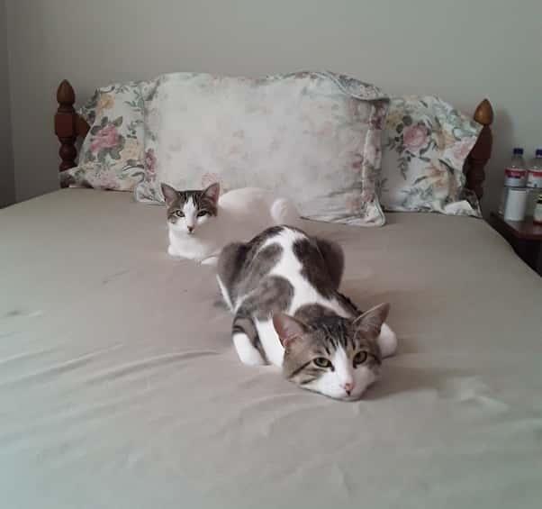 close cat in a room