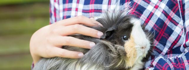 Guinea Pig Care 6