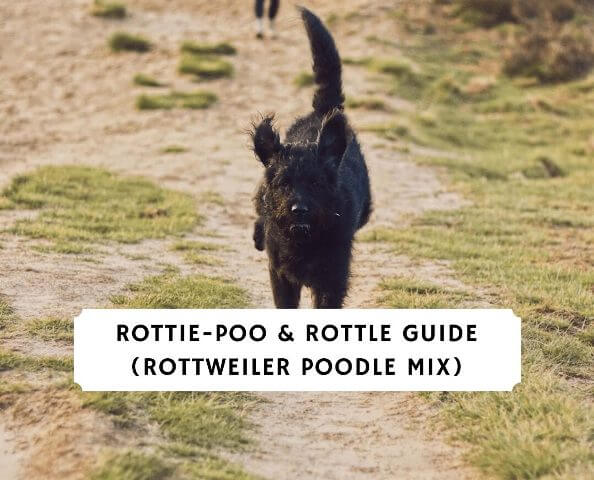Rottle Exercise Tips