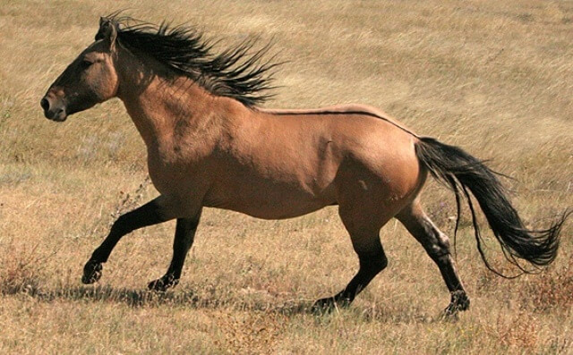 Mustang Horse for Sale 2