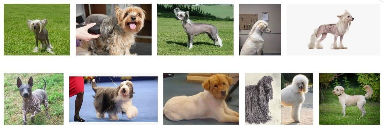 Popular Shaved Dog Breeds