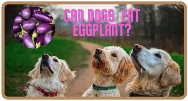 can dogs eat eggplant 4