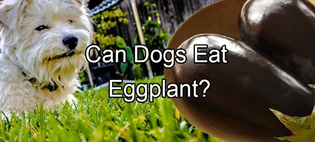 can dogs eat eggplant 5