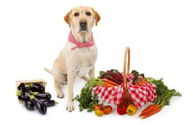 can dogs eat eggplant 6