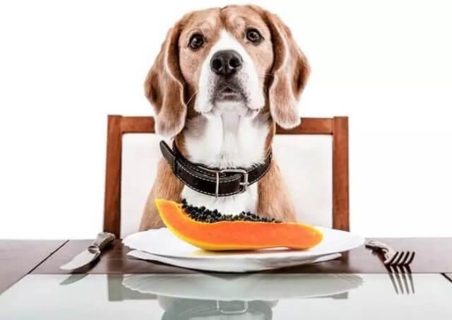 can dogs eat papaya 1