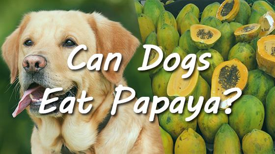 can dogs eat papaya 2