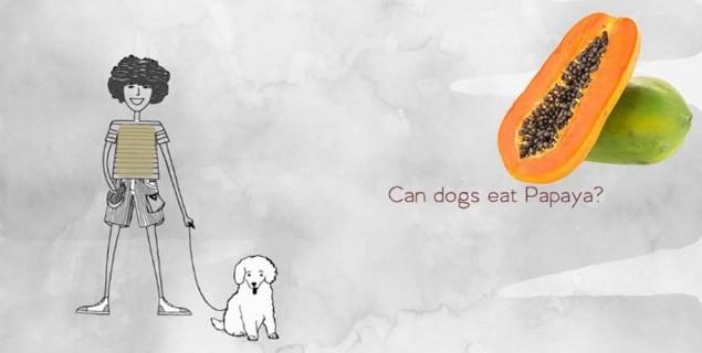 can dogs eat papaya 6
