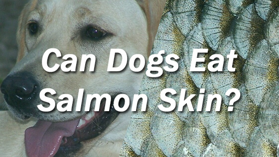 can dogs eat salmon 1