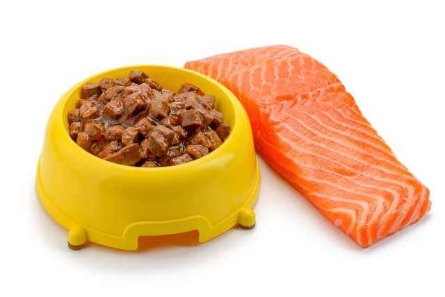 can dogs eat salmon 2