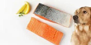 can dogs eat salmon skin 1