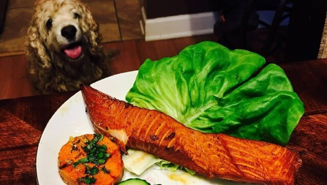can dogs eat salmon skin