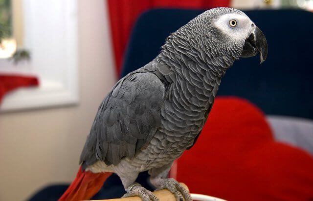 different types of parrots 4