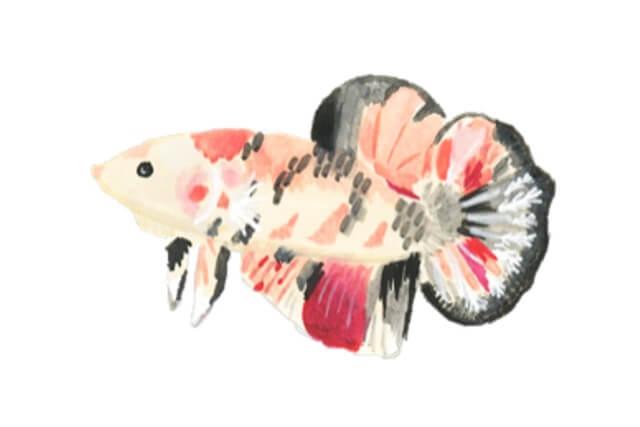 Baby Betta Fish Care 7