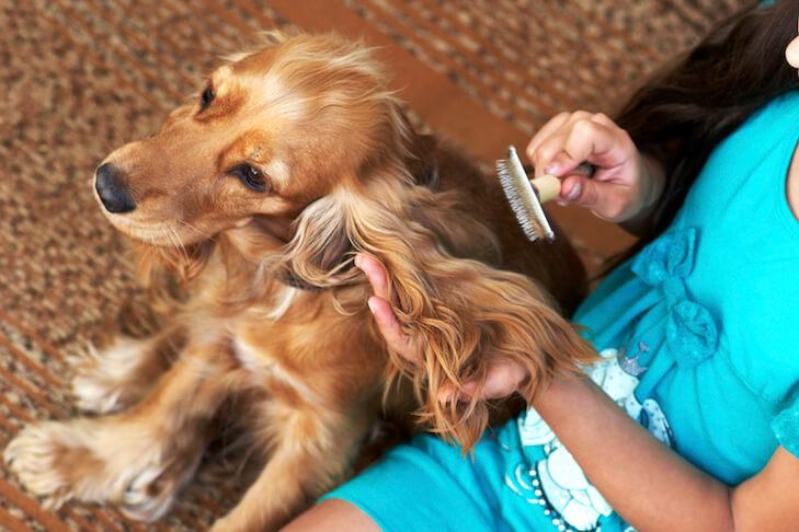 Brushing dog hair
