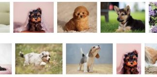 Cutest Dog Breeds as Puppies