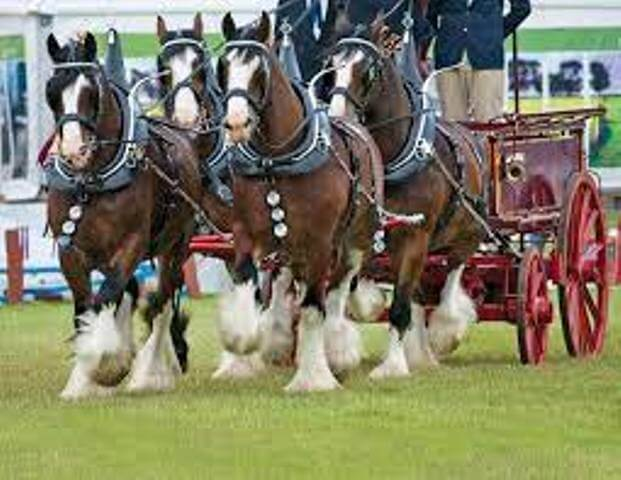 FAQ of Clydesdale Horse